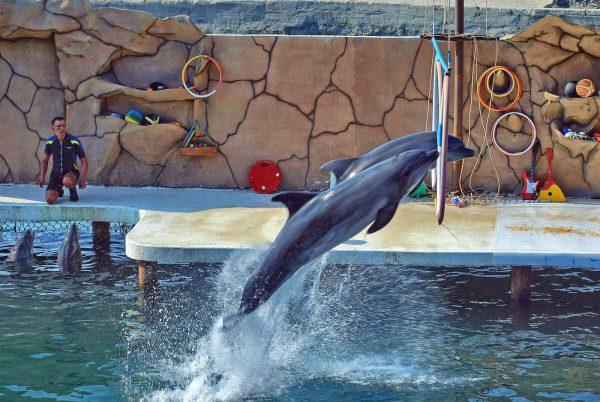 Дельфинарий в Кисловодске