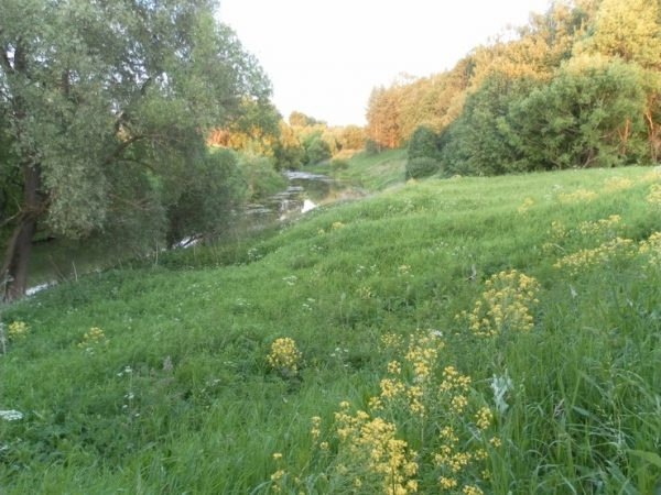 Долина грёз с ручьём в Тарусе