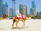 Эмираты путыня и верблюд