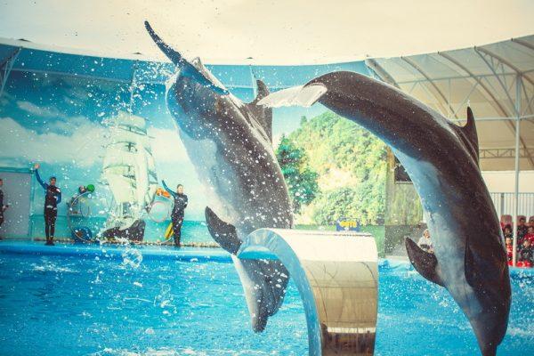 Дельфинарий «Немо» в Феодосии