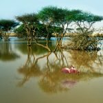 Мангровые деревья и фламинго на острове