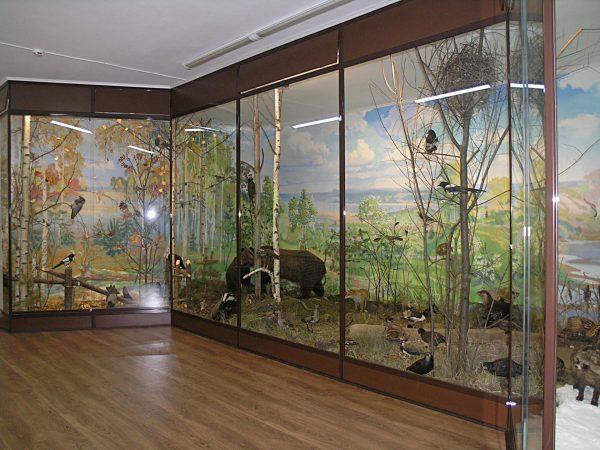 Музей природы в Великом Устюге