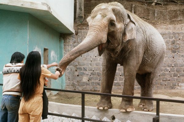 Слон в Avilon Zoo
