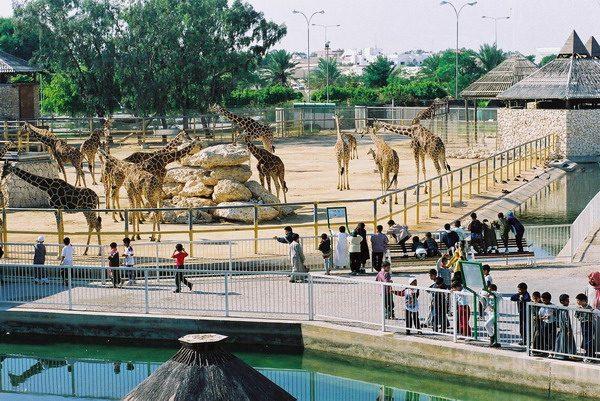 Вольеры с жирафами в зоопарке Дохи