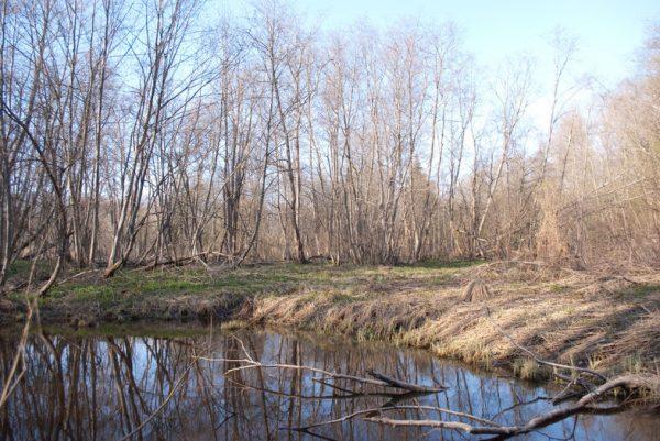 Чёрное болото в Ржеве