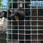 Чёрный медведь в клетке Нальчикского зоопарка