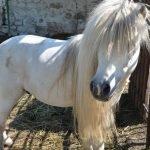 Белая лошадь в вольере Нальчикского зоопарка