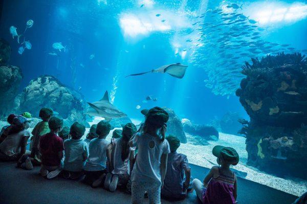Дети наблюдают за морскими обитателями в океанариуме