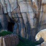 Медведь в Lincoln Park Zoo