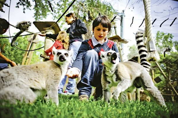 Мальчик кормит лемуров в зоопарке