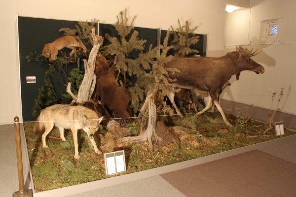 Мытищинский музей охраны природы