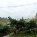Орнитологическая станция «Фрингилла»