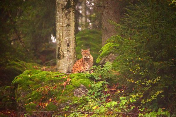 «Баварский лес»
