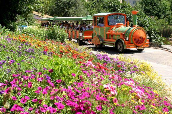 Паровозик везёт посетителей по Ботаническому саду