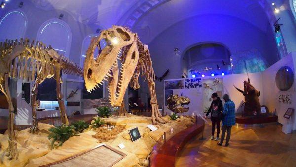 Музей естествознания в Хельсинки