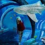 Окенариум Sea Life