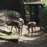 Представители финской фауны в зоопарке Коркеасаари в Хельсинки