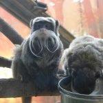 Вольеры обезьян в зоопарке Коркеасаари в Хельсинки