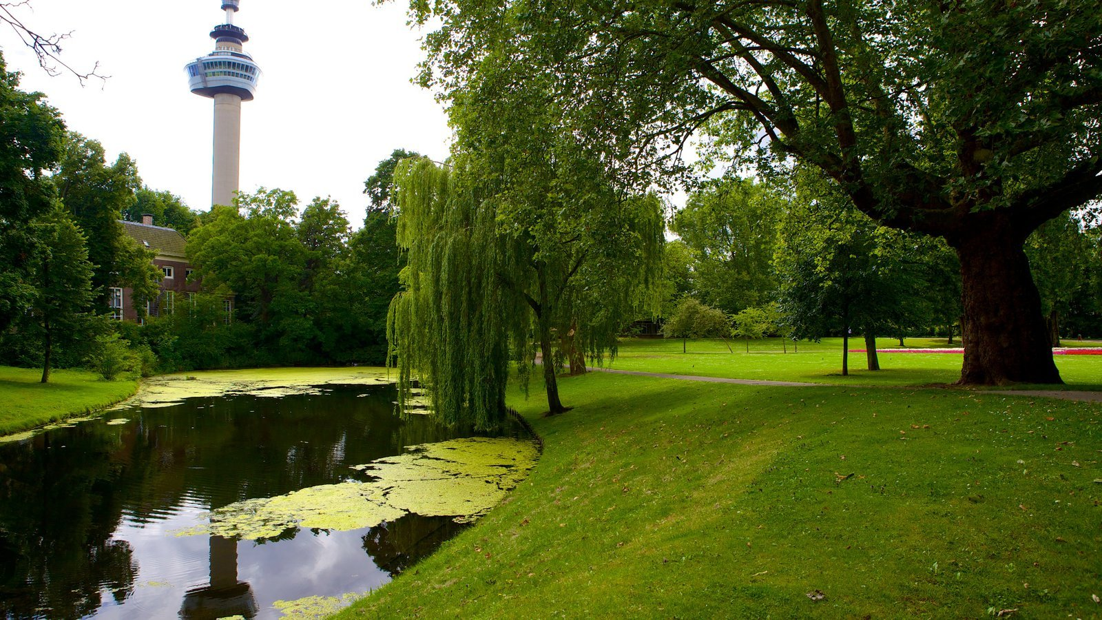 Обои лето, Облака, Дирксланд, нидерланды. Пейзажи foto 19