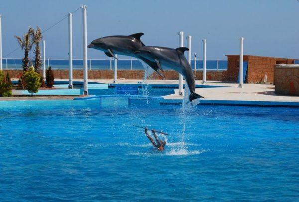 Шоу дельфинов в парке «Сиаланья» возле Аланьи
