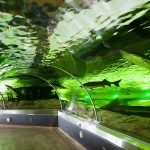 Большой аквариум морского музея