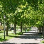Аллея в парке «Бастион»