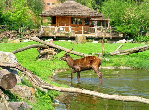 Животные Пражского зоопарка