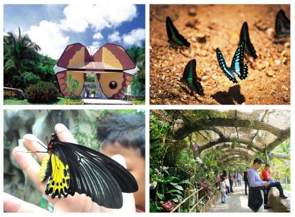 Парк бабочек возле Саньи