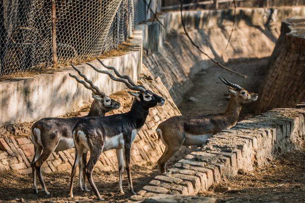 Животные в зоопарке Дели
