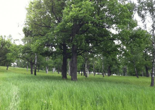 Парк «Дубки» в Мароярославце