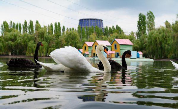 Лебединое озеро в Липецке