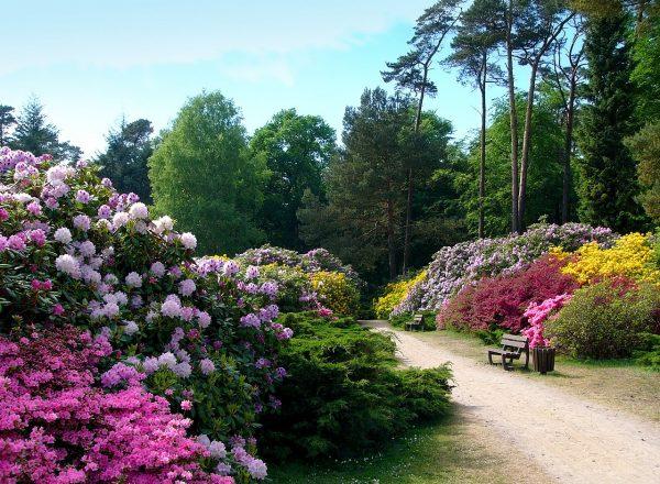 Разноцветные цветочные клумбы в парке