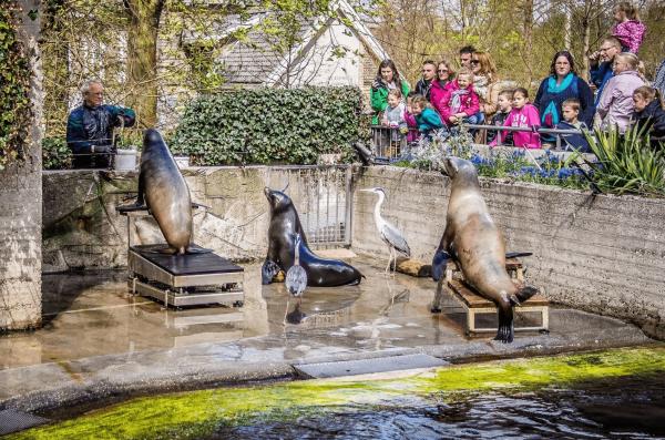 Работник зоопарка кормит тюленей рыбой