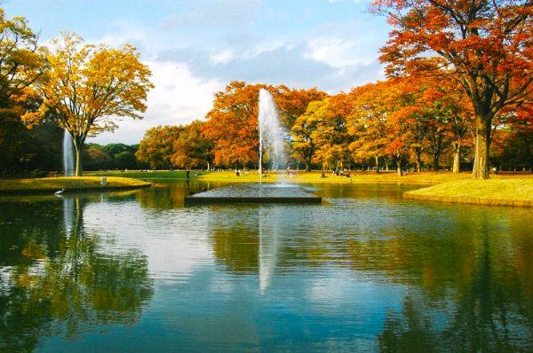 Пруд с фонтаном в окружении деревьев в парке Ёёги