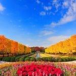 Жёлтые деревья и осенние цветы в паре Сева