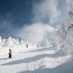 Живописный лыжный спуск между заснеженными деревьями