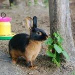Кролик в зоопарке «Глория»