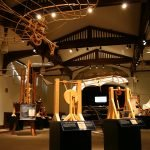 Экспозиция в музее Леонардо