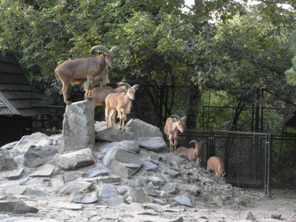 Животные в Краковском зоопарке