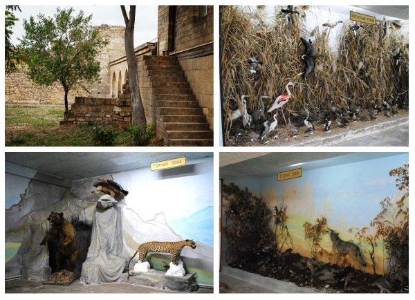 Музей «Природа Прикаспия» в Дербенте