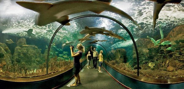 Акулий тоннель