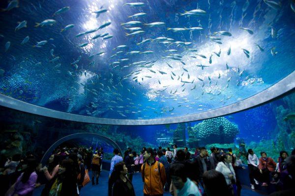 Внутри океанариума Оушен парк в Гонконге