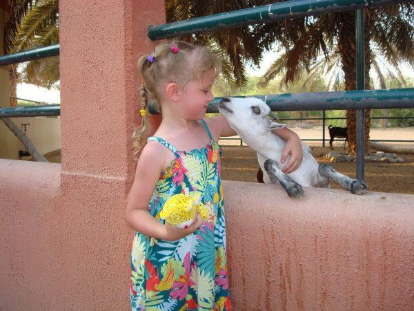 Девочка и козлёнок
