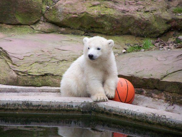 Медведь в Нюрнбергском зоопарке