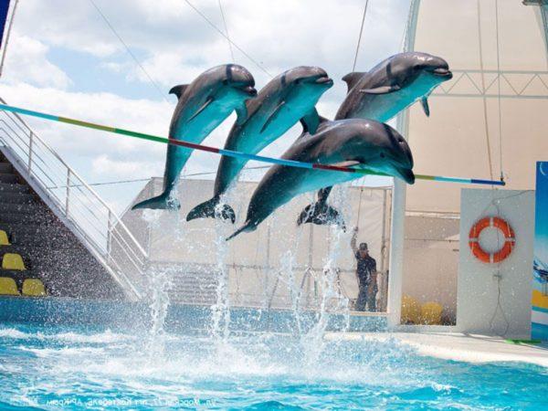 Дельфинарий Коктебель, четыре дельфина прыгают