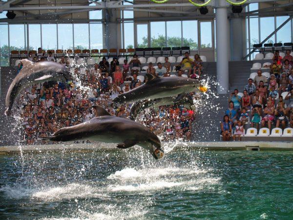 Дельфины с мячиками