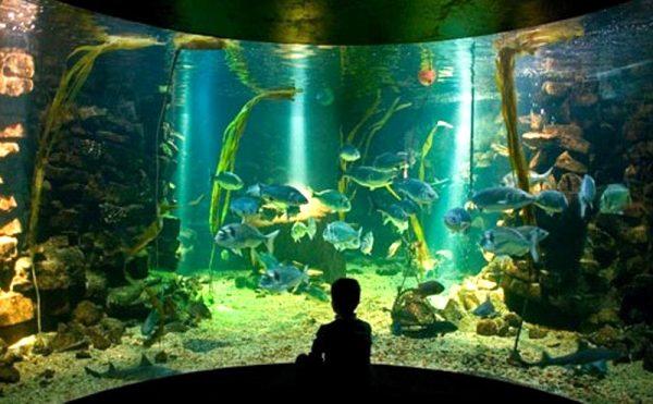 Ребёнок смотрит на морских обитателей в аквариуме морского парка