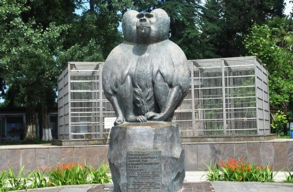 Памятник обезьяне, Сухум