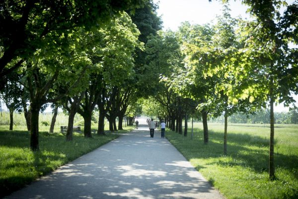 Участок парка