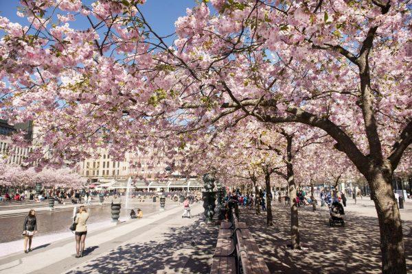 Парк Кунгстрэдгорден в Стокгольме